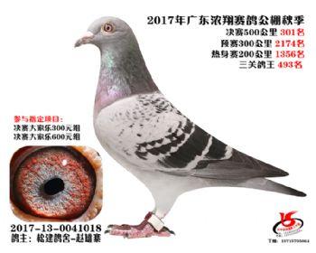 广东浓翔获奖鸽301名