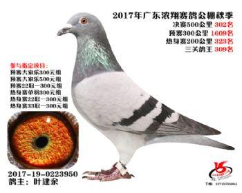 广东浓翔获奖鸽302名
