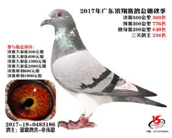 广东浓翔获奖鸽303名