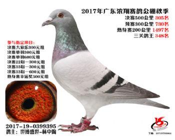 广东浓翔获奖鸽305名