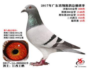 广东浓翔获奖鸽309名