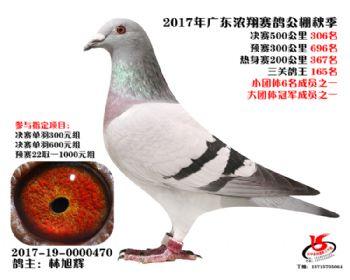 广东浓翔获奖鸽306名