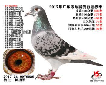 广东浓翔获奖鸽308名