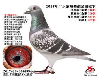 广东浓翔获奖鸽310名