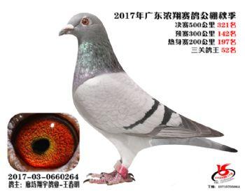 广东浓翔获奖鸽321名