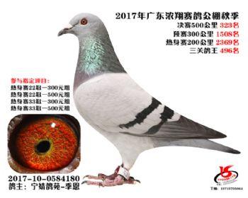 广东浓翔获奖鸽323名