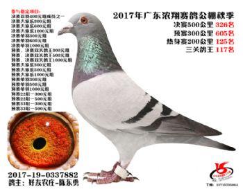 广东浓翔获奖鸽326名