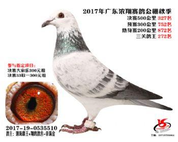 广东浓翔获奖鸽327名