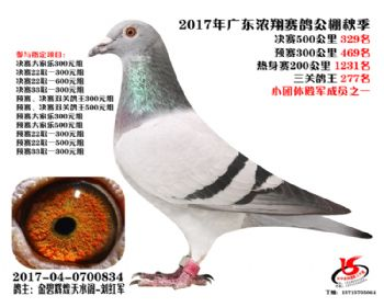 广东浓翔获奖鸽329名