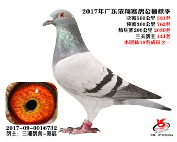 广东浓翔获奖鸽331名