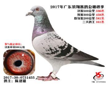 广东浓翔获奖鸽336名