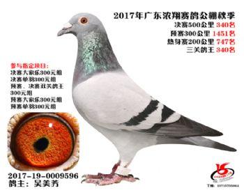 广东浓翔获奖鸽340名