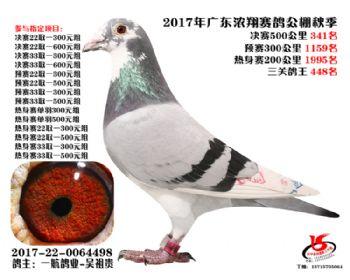 广东浓翔获奖鸽341名