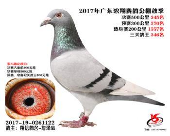广东浓翔获奖鸽345名