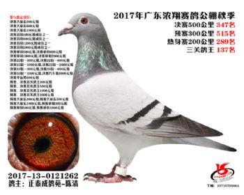 广东浓翔获奖鸽347名