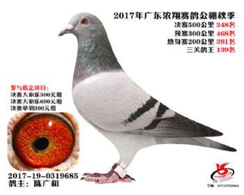 广东浓翔获奖鸽348名