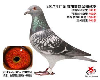 广东浓翔获奖鸽351名