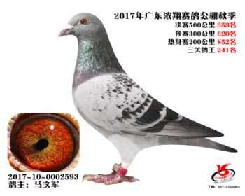 广东浓翔获奖鸽353名