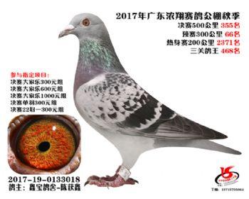 广东浓翔获奖鸽355名