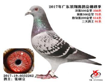 广东浓翔获奖鸽356名