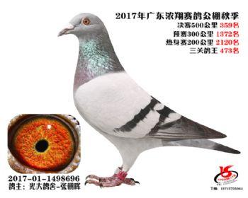 广东浓翔获奖鸽359名