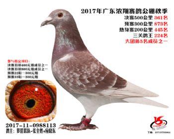 广东浓翔获奖鸽361名