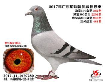 广东浓翔获奖鸽362名