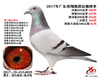 广东浓翔获奖鸽363名
