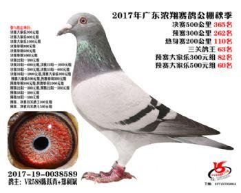 广东浓翔获奖鸽365名