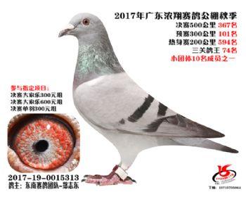 广东浓翔获奖鸽367名