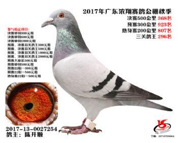 广东浓翔获奖鸽368名