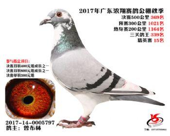 广东浓翔获奖鸽369名