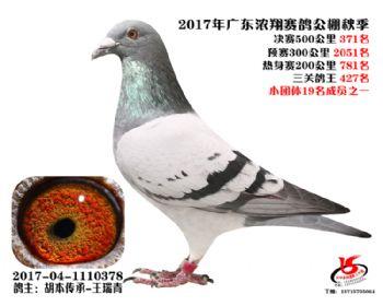 广东浓翔获奖鸽371名