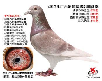 广东浓翔获奖鸽372名