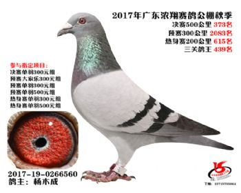 广东浓翔获奖鸽373名