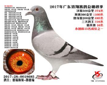 广东浓翔获奖鸽374名