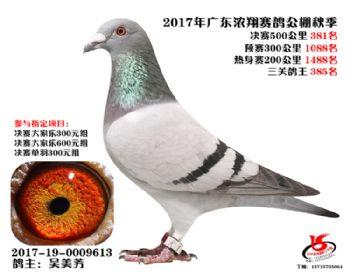 广东浓翔获奖鸽381名