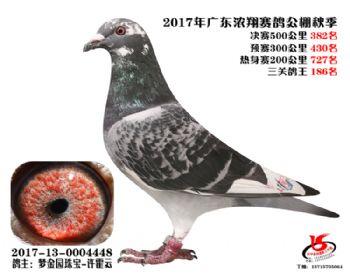 广东浓翔获奖鸽382名
