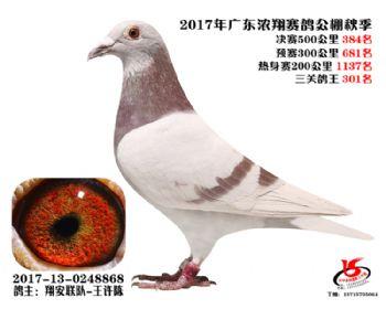 广东浓翔获奖鸽384名