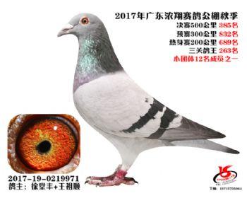 广东浓翔获奖鸽385名