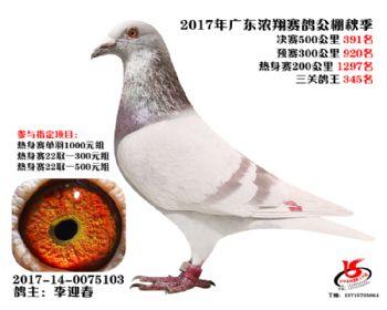 广东浓翔获奖鸽391名