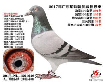 广东浓翔获奖鸽394名