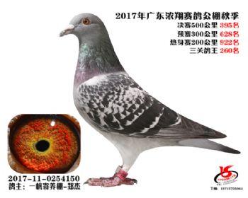 广东浓翔获奖鸽395名