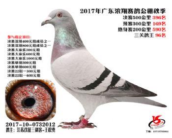 广东浓翔获奖鸽396名