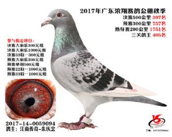 广东浓翔获奖鸽397名
