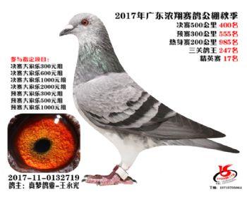 广东浓翔获奖鸽400名
