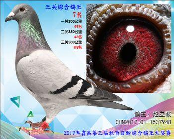 7名 赵立波戈马利黑杰克血系参考雄