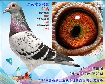 23 尹川强乔司迪诺盖比血系参考雌