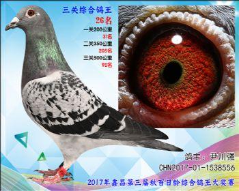 26 尹川强乔司迪诺盖比血系参考雌
