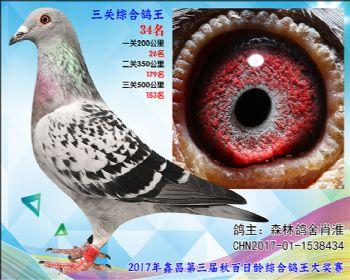 34 森林鸽舍肖淮参考雌